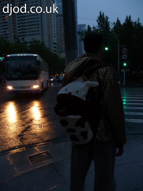 Cow photo Shanghai