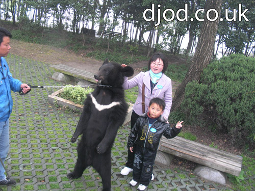 Bear on a chain in a zoo in China! (中国动物园里戴着锁链的熊!)