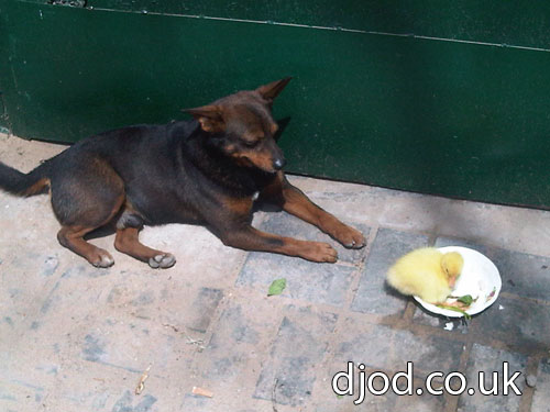 The Dog and Duck – 狗与鸭