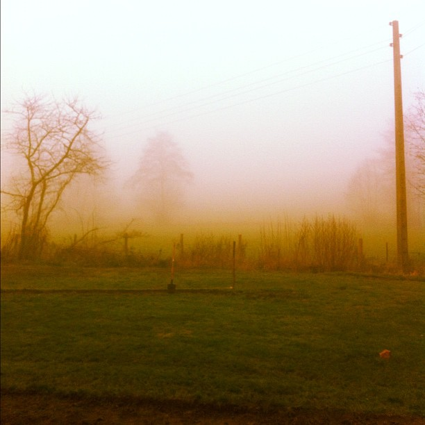 Misty start this morning #instagram #france