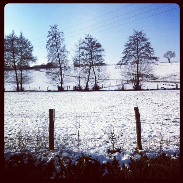 Obligatory snow field pic