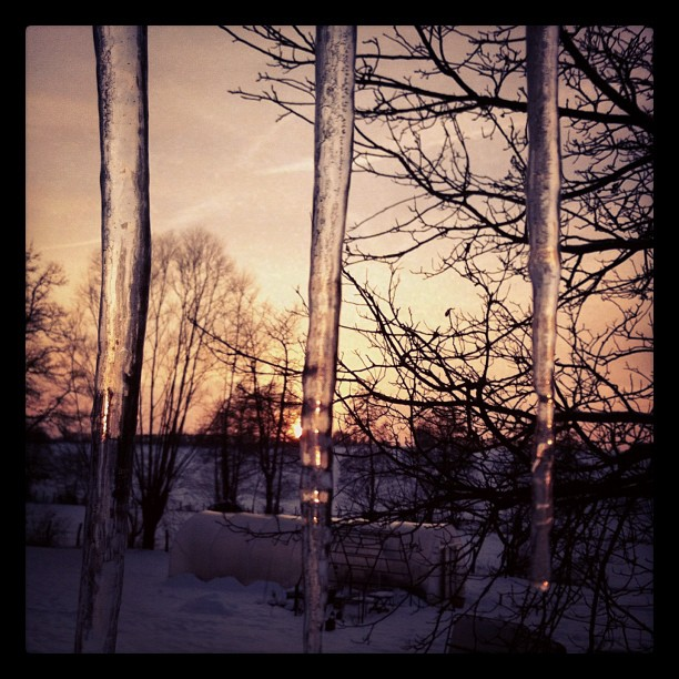 Sunset in an ice prison #instagram #sunset #icicle