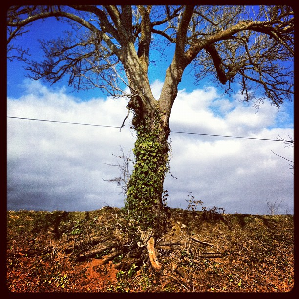 Tree cake #instagram #france