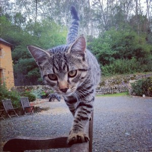 Photo – Tightrope cat
