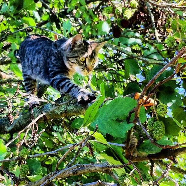Photo - Squirrel hunter