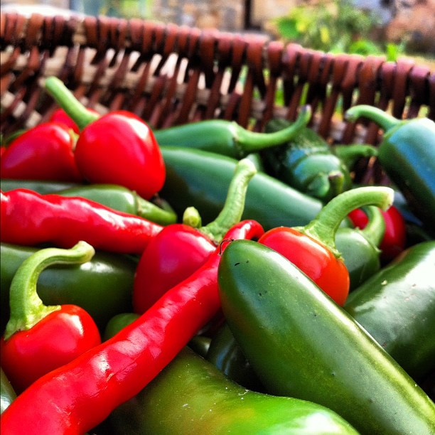 Photo - Final chili pepper harvest of the year